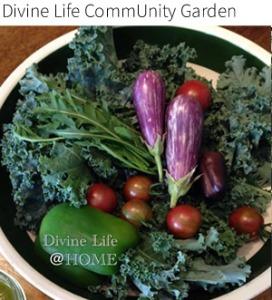 Divine Life Playhouse CommUnity Garden